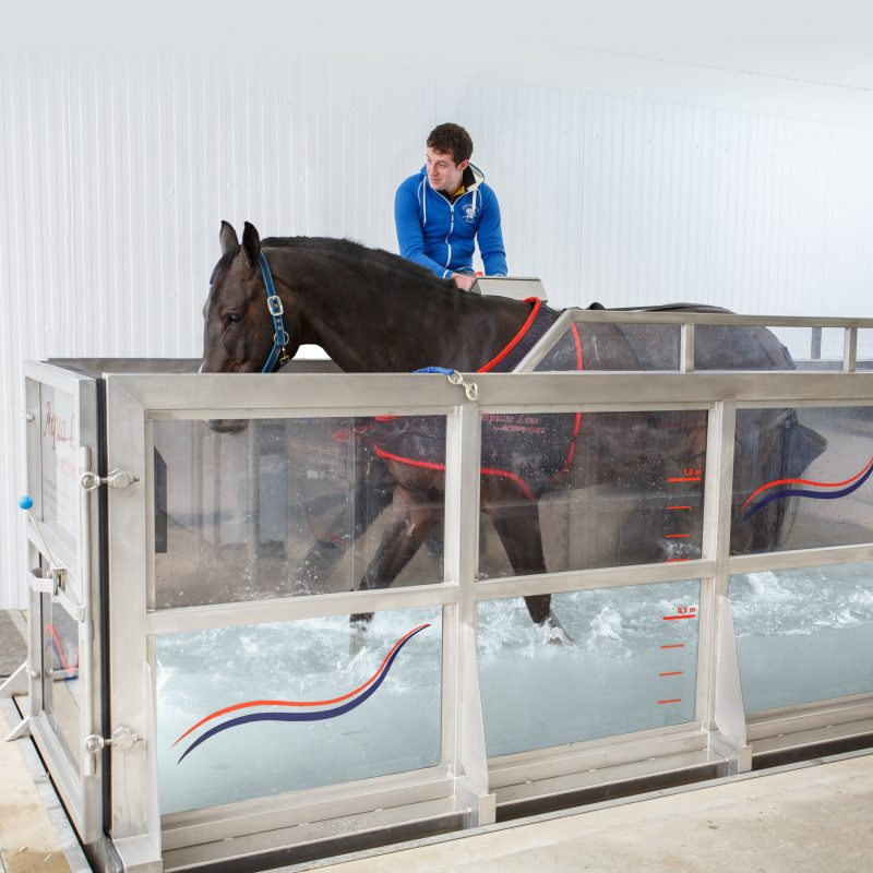 Equine Water Treadmill Fmbs Therapy Systems