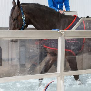 Equine Spas/ Floors/ Treadmills/ Solariums